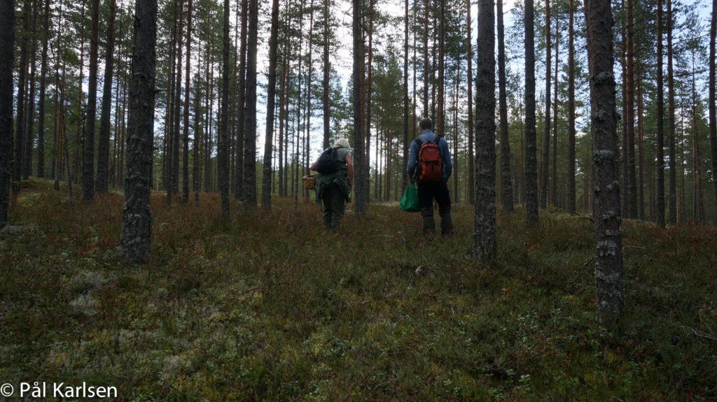To personer i en skog