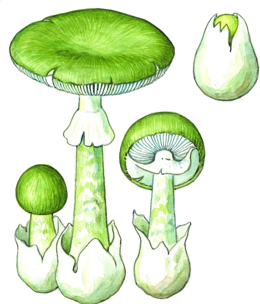 grønn fluesopp